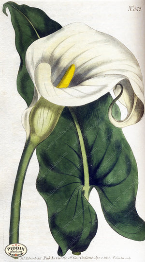 Flowers Pdxc1793 Color Illustration