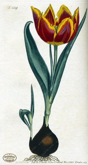 Flowers Pdxc1795 Color Illustration