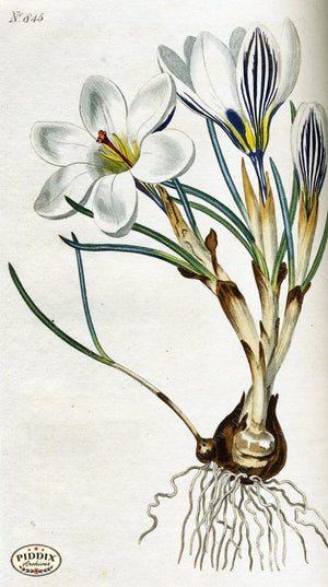 Flowers Pdxc1797 Color Illustration