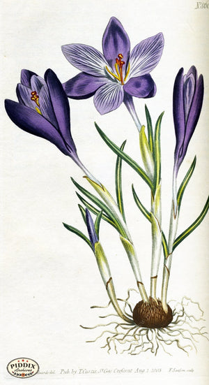Flowers Pdxc1798 Color Illustration