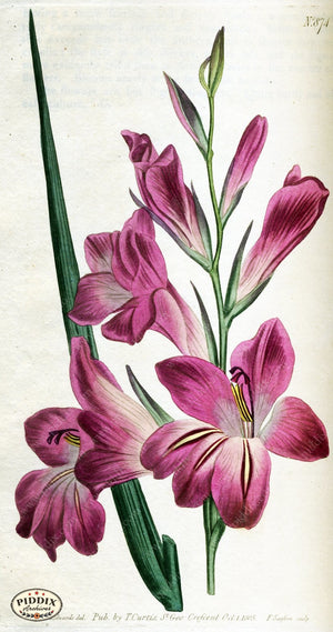 Flowers Pdxc1799 Color Illustration