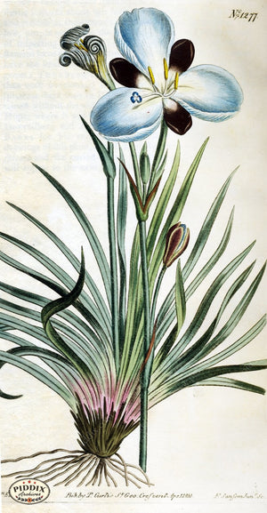 Flowers Pdxc1814 Color Illustration