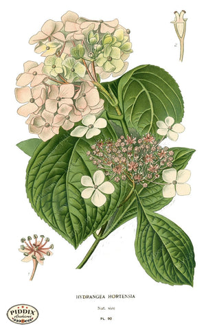 Flowers Pdxc3836 Color Illustration