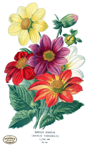 Flowers Pdxc3840 Color Illustration