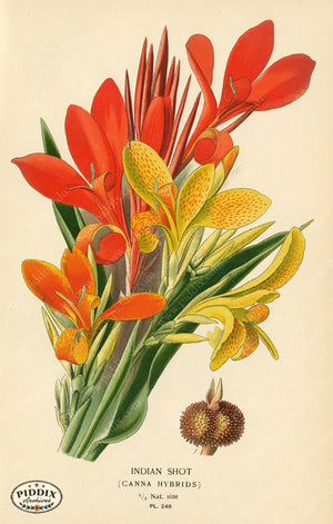 Flowers Pdxc3844 Color Illustration