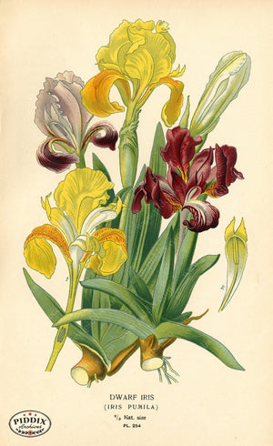 Flowers Pdxc3845 Color Illustration