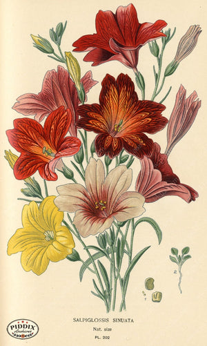 Flowers Pdxc3853 Color Illustration