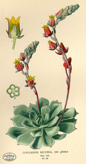 Flowers Pdxc3945 Color Illustration