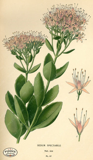 Flowers Pdxc3946 Color Illustration