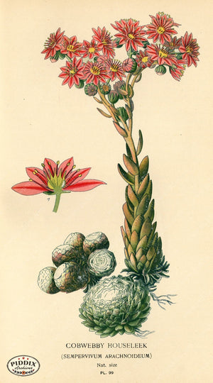 Flowers Pdxc3948 Color Illustration