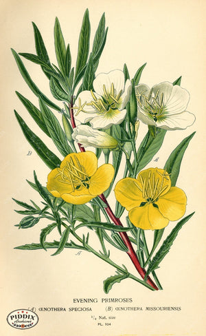 Flowers Pdxc3953 Color Illustration