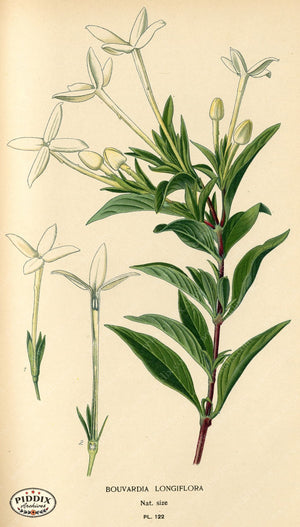 Flowers Pdxc3971 Color Illustration