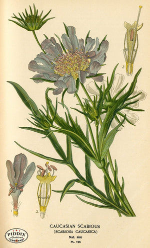 Flowers Pdxc3974 Color Illustration