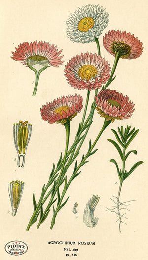 Flowers Pdxc3985 Color Illustration