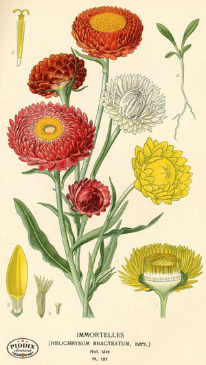 Flowers Pdxc3986 Color Illustration