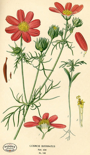 Flowers Pdxc3987 Color Illustration