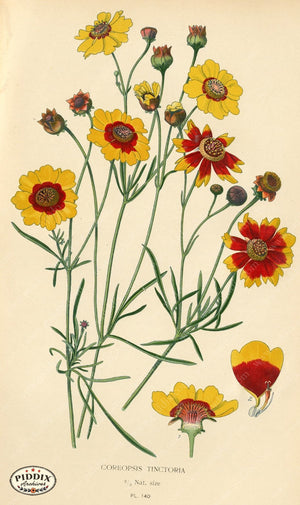 Flowers Pdxc3988 Color Illustration