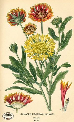 Flowers Pdxc3991 Color Illustration