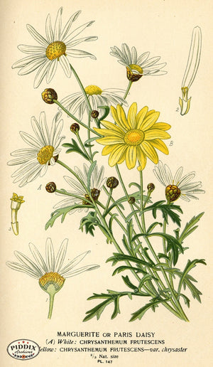 Flowers Pdxc3993 Color Illustration