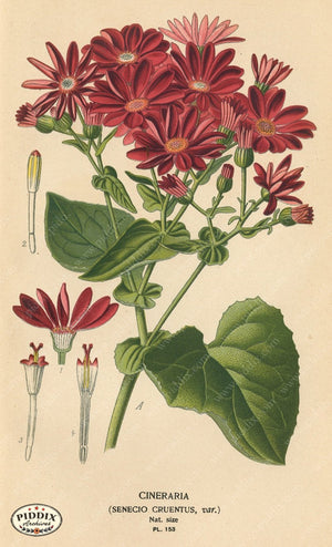 Flowers Pdxc3999 Color Illustration