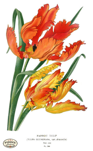 Flowers Pdxc4128 Color Illustration