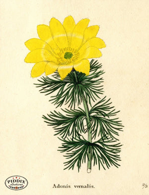Flowers Pdxc5724 Color Illustration