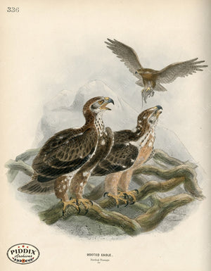 Pdxc1355 -- Birds Color Illustration