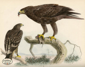 Pdxc1357 -- Birds Color Illustration