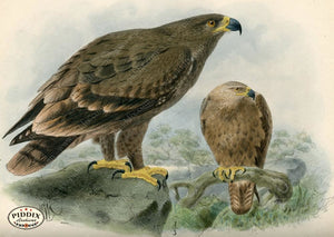 Pdxc1358 -- Birds Color Illustration