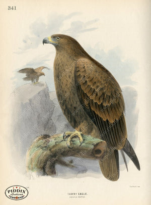 Pdxc1359 -- Birds Color Illustration