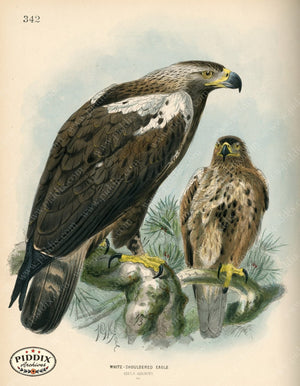 Pdxc1360 -- Birds Color Illustration