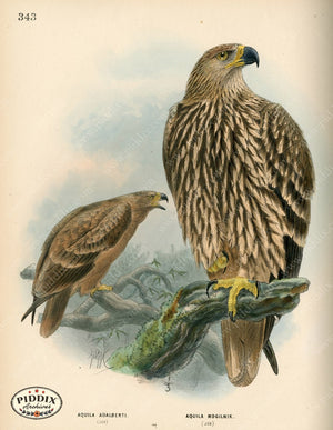 Pdxc1361 -- Birds Color Illustration