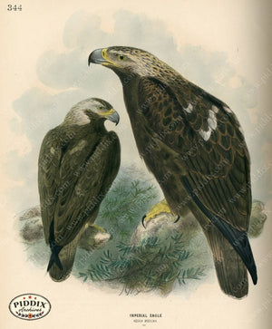 Pdxc1362 -- Birds Color Illustration