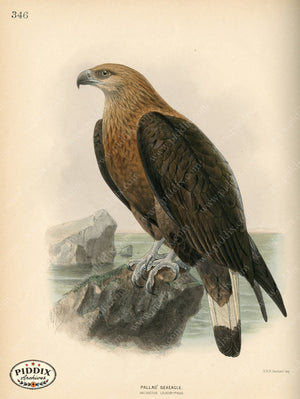 Pdxc1364 -- Birds Color Illustration