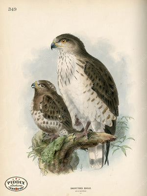 Pdxc1367 -- Birds Color Illustration