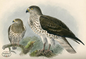 Pdxc1368 -- Birds Color Illustration