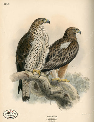 Pdxc1369 -- Birds Color Illustration