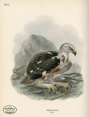 Pdxc1370 -- Birds Color Illustration