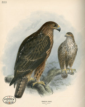 Pdxc1371 -- Birds Color Illustration