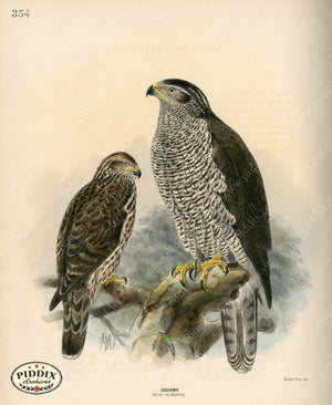 Pdxc1372 -- Birds Color Illustration