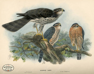 Pdxc1373 -- Birds Color Illustration