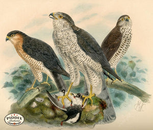 Pdxc1375 -- Birds Color Illustration