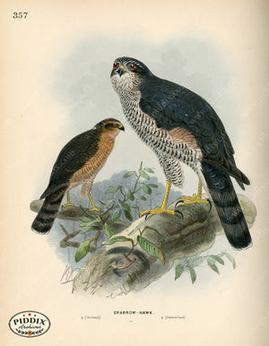 Pdxc1376 -- Birds Color Illustration