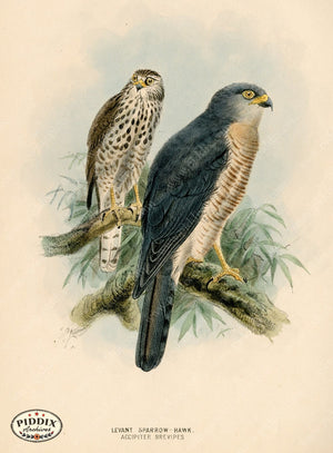Pdxc1377 -- Birds Color Illustration