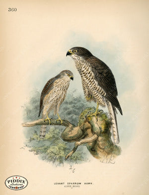 Pdxc1378 -- Birds Color Illustration