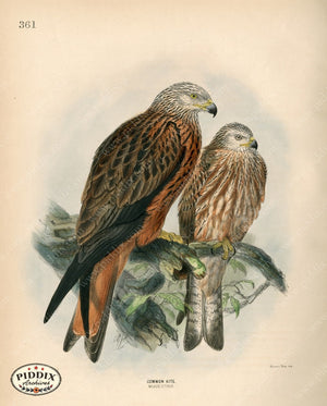 Pdxc1379 -- Birds Color Illustration