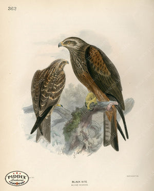 Pdxc1380 -- Birds Color Illustration