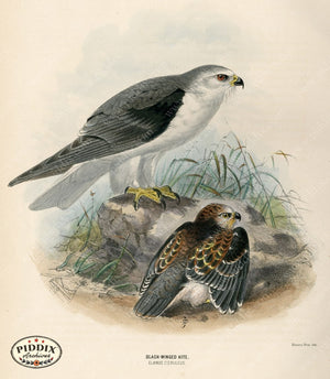 Pdxc1381 -- Birds Color Illustration