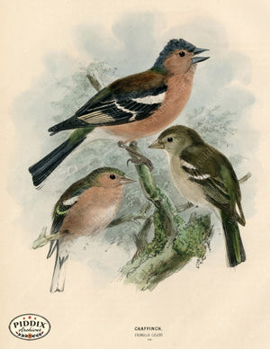 Pdxc1383 -- Birds Color Illustration
