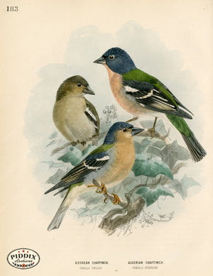 Pdxc1384 -- Birds Color Illustration